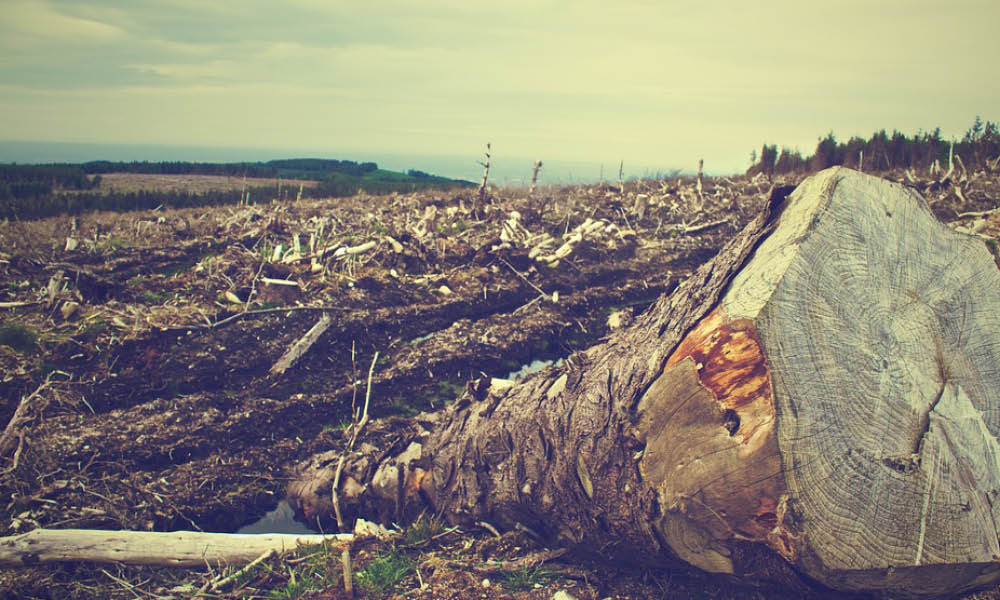 Activist Empowered by Access to Decision-Makers in Deforestation Campaign